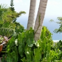 Visit Nevis Island on Yacht Charter