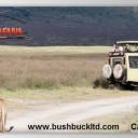 Bushbucksafaris